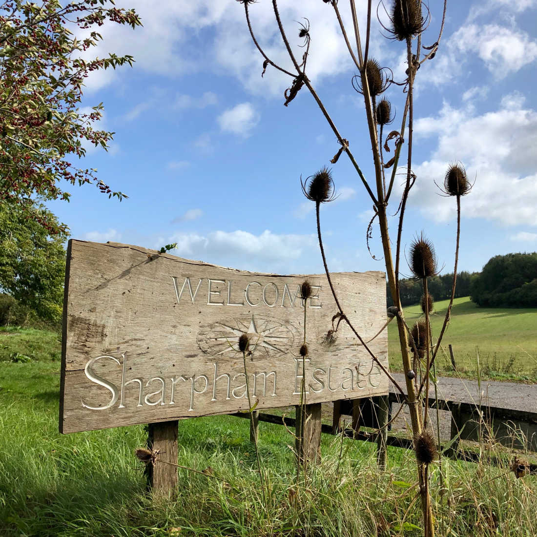 Ticklemore-Goats-Cheese-Sharpham-Estate