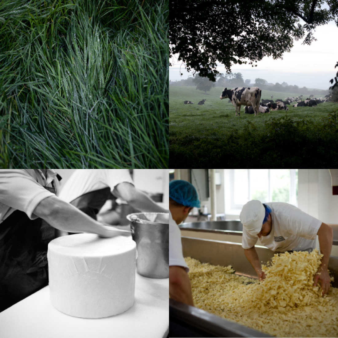 Westcombe-Cheddar-Collage